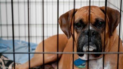 Einzel-Haltung im Zwinger der Hundepension