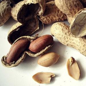 Dürfen Hunde Erdnüsse essen?