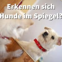 Erkennen sich Hunde im Spiegel? Und was sehen sie im Spiegelbild