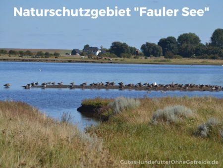 Naturschutzgebiet Fauler See, auf Insel Poel