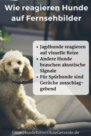 Wie reagieren Hunde auf Fernsehbilder?
