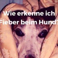 Wie erkenne ich Fieber beim Hund?