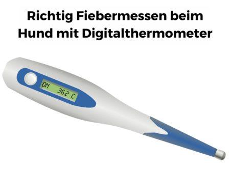 Richtig Fiebermessen beim Hund mit Digitalthermometer