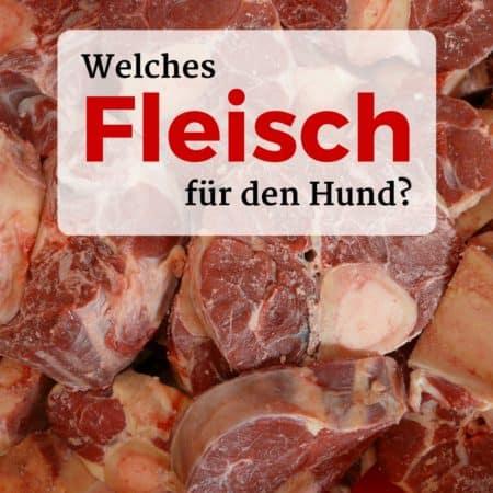 Welches Fleisch für den Hund?