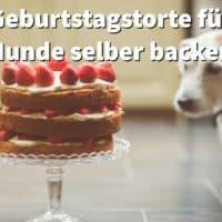 Geburtstagstorte für Hunde selber backen, Rezepte ohne Getreide