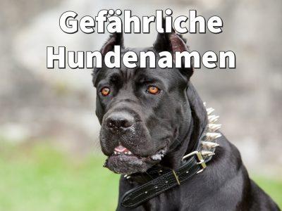 Gefährliche Hundenamen: Namen, die böse und aggressiv klingen