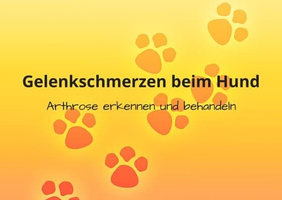 Gelenkschmerzen beim Hund, was hilft? Arthrose erkennen und behandeln