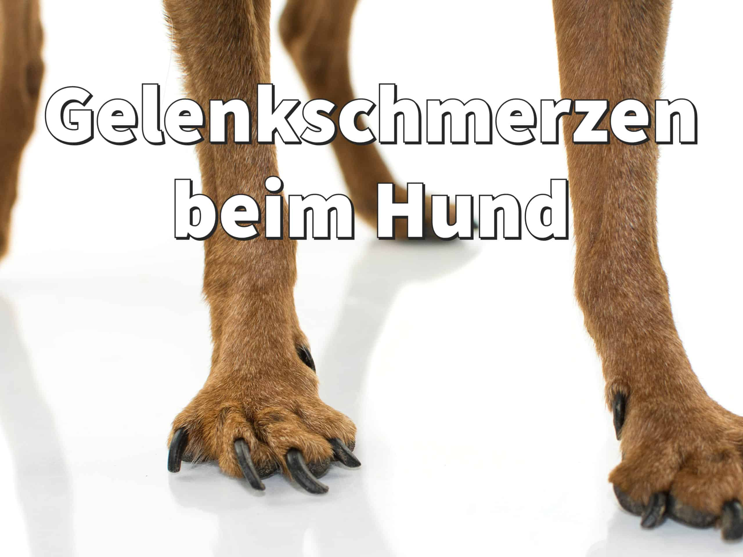 Gelenkschmerzen Hund: Ursachen erkennen und Arthrose lindern