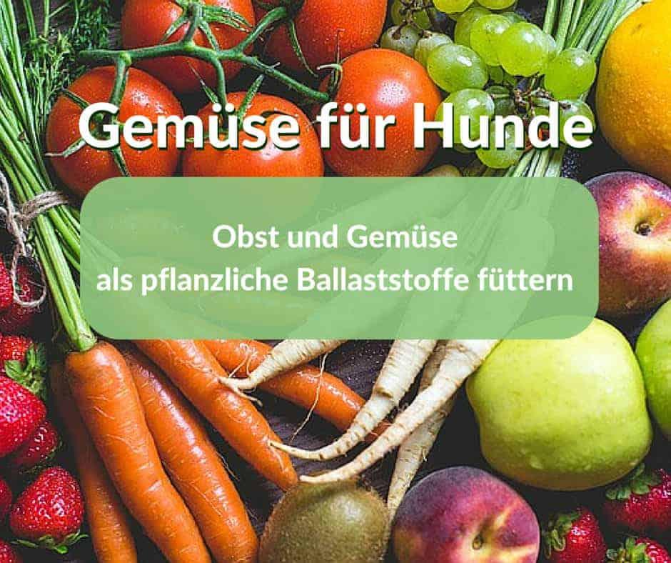 Gemüse für Hunde, mit Obst und Gemüse pflanzliche Ballaststoffe füttern