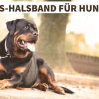 GPS-Halsband für Hunde