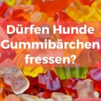 Dürfen Hunde Gummibärchen fressen?