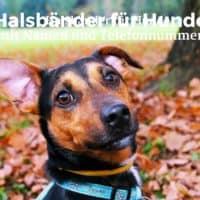 Halsbänder für Hunde mit Namen und Telefonnummer