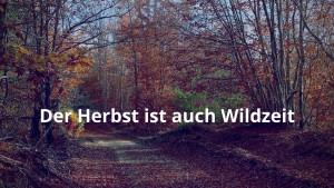 Der Herbst ist im Wald auch Wildzeit