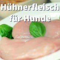 Hühnerfleisch für Hunde, ob roh, Hähnchen mit Reis oder Geflügel-Innereien