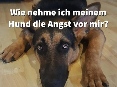 Wie nehme ich meinem Hund die plötzliche Angst vor mir?