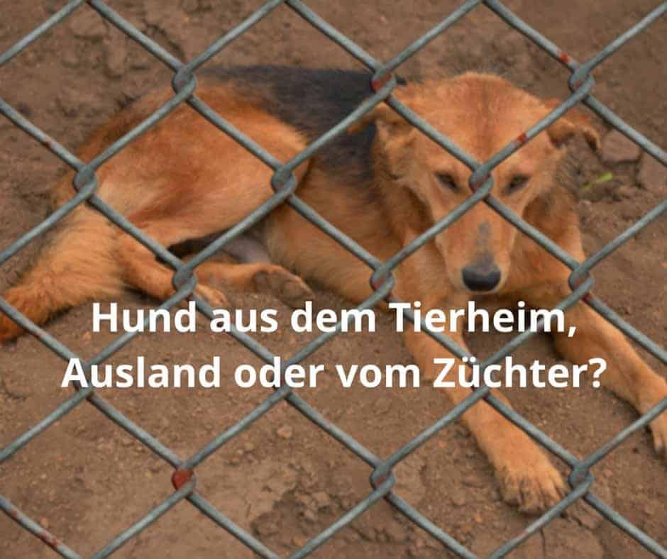 Hund aus dem Tierheim, Ausland oder vom Züchter?