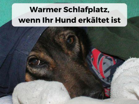 Warmer Schlafplatz, wichtig für Hund mit Erkältung