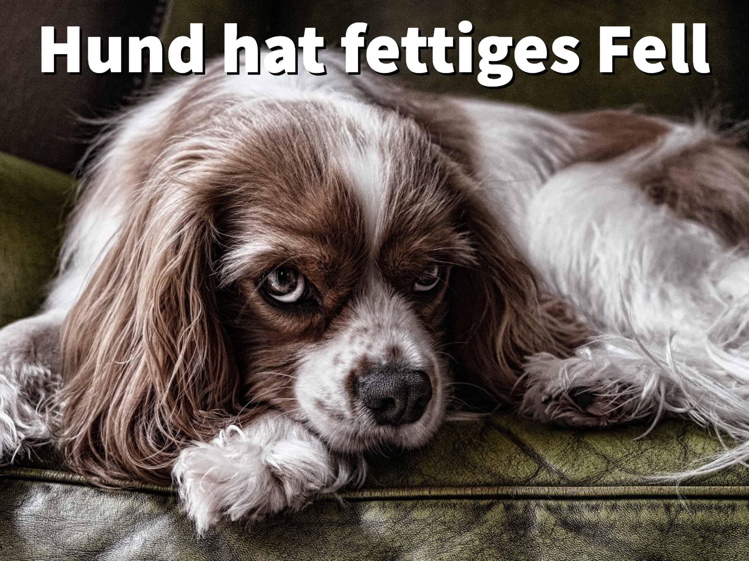 hund hat fettiges fell und stinkt was kann ich dagegen tun. Black Bedroom Furniture Sets. Home Design Ideas