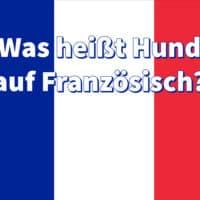 Was heißt Hund auf Französisch?