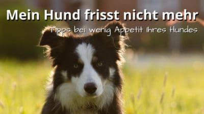 Mein Hund frisst schlecht: Tipps gegen Appetitlosigkeit beim Hund
