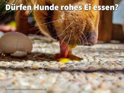 Dürfen Hunde rohes Ei essen?