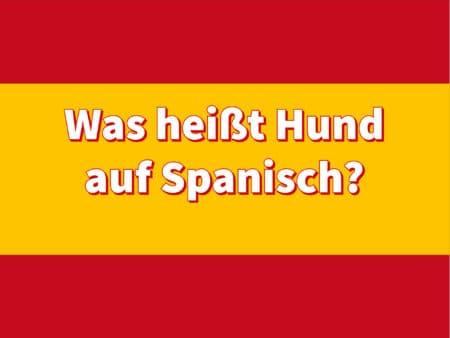 Was heißt Hund auf Spanisch?