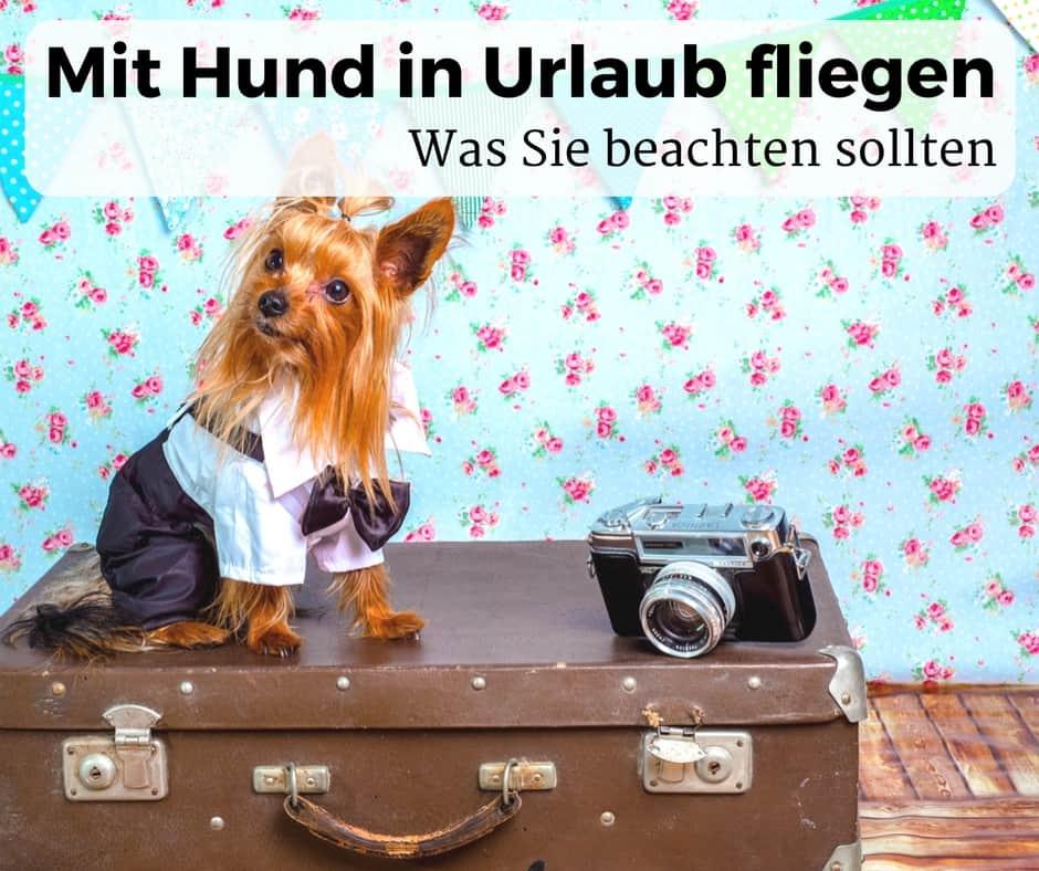 Mit Hund in Urlaub fliegen und was Sie beachten sollten
