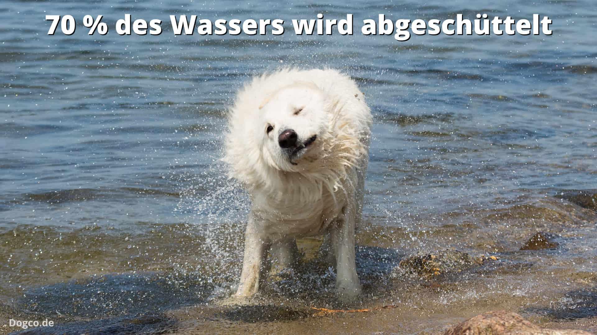 Nasses Hundefutter verliert schnell an Gewicht