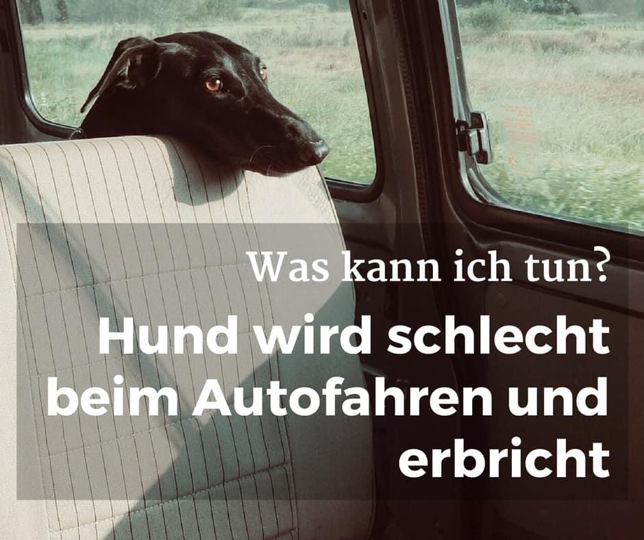 Hund wird schlecht beim Autofahren und erbricht, was kann ich tun?