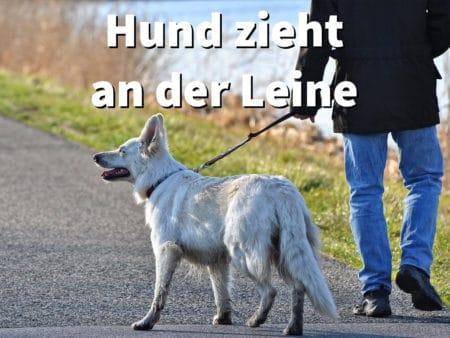 Hund zieht an der Leine! Ziehen abgewöhnen, ohne Hilfsmittel