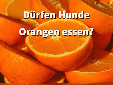 Dürfen Hunde Orangen fressen?