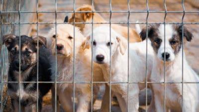 Straßenhunde im Tierheim
