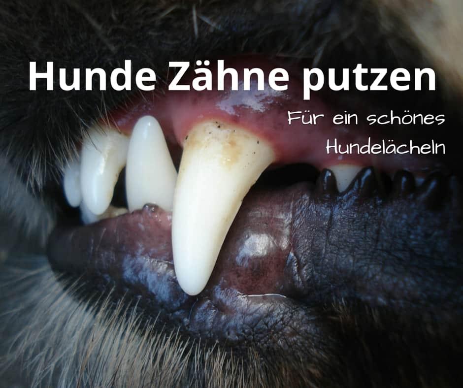 Hunde Zähne putzen, für ein schönes Hundelächeln