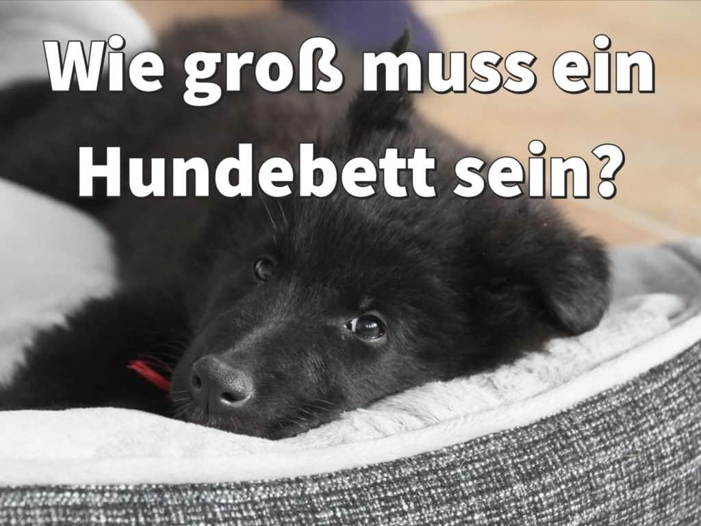 Hundebett: Welche Größe für welchen Hund?