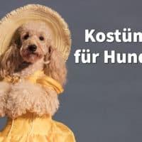 Kostüme für Hunde: Tolle Verkleidungen für Karneval, Halloween und Weihnachten