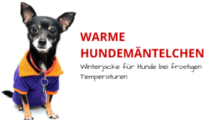 Warme Hundemäntelchen und Winterjacke für Hunde bei frostigen Temperaturen