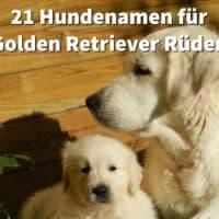 21 Hundenamen für Golden Retriever Rüden