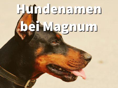 Hundenamen bei Magnum, wie heißen die Dobermänner aus der Fernsehserie?