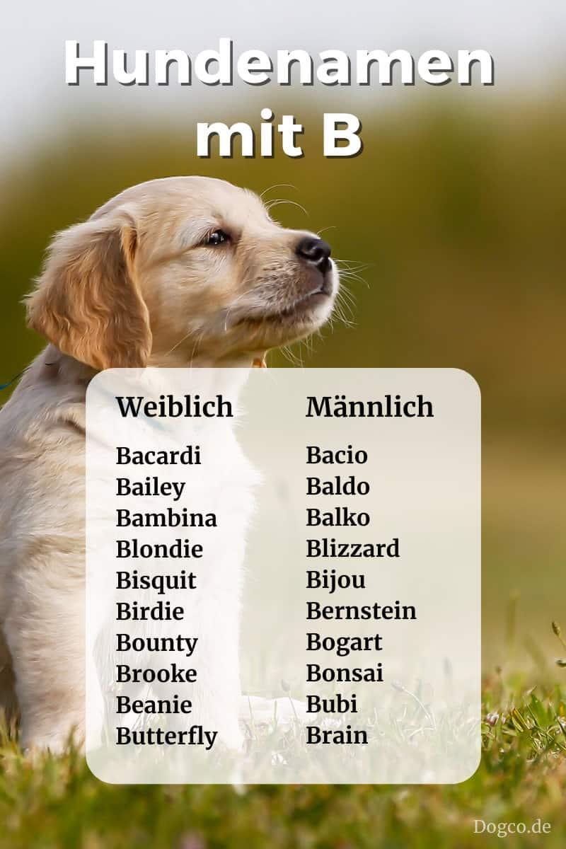 Hunde Namen