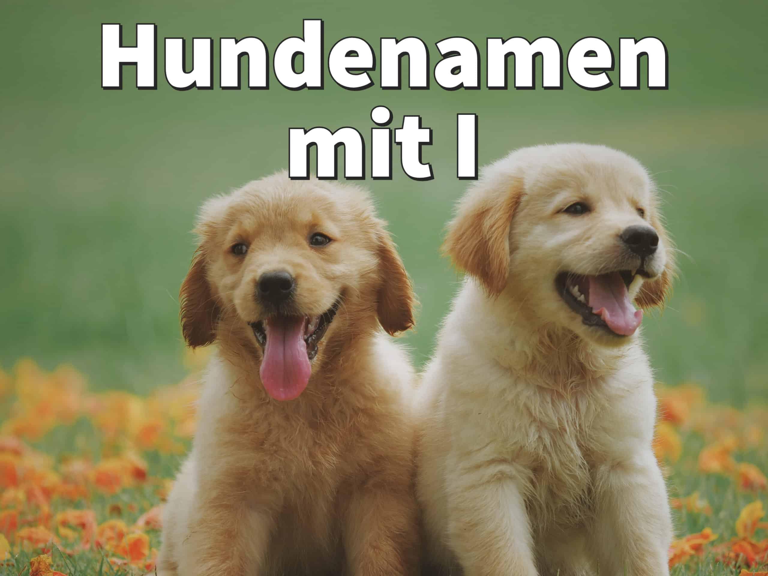 Hundenamen mit I: weiblich und männlich mit Bedeutung