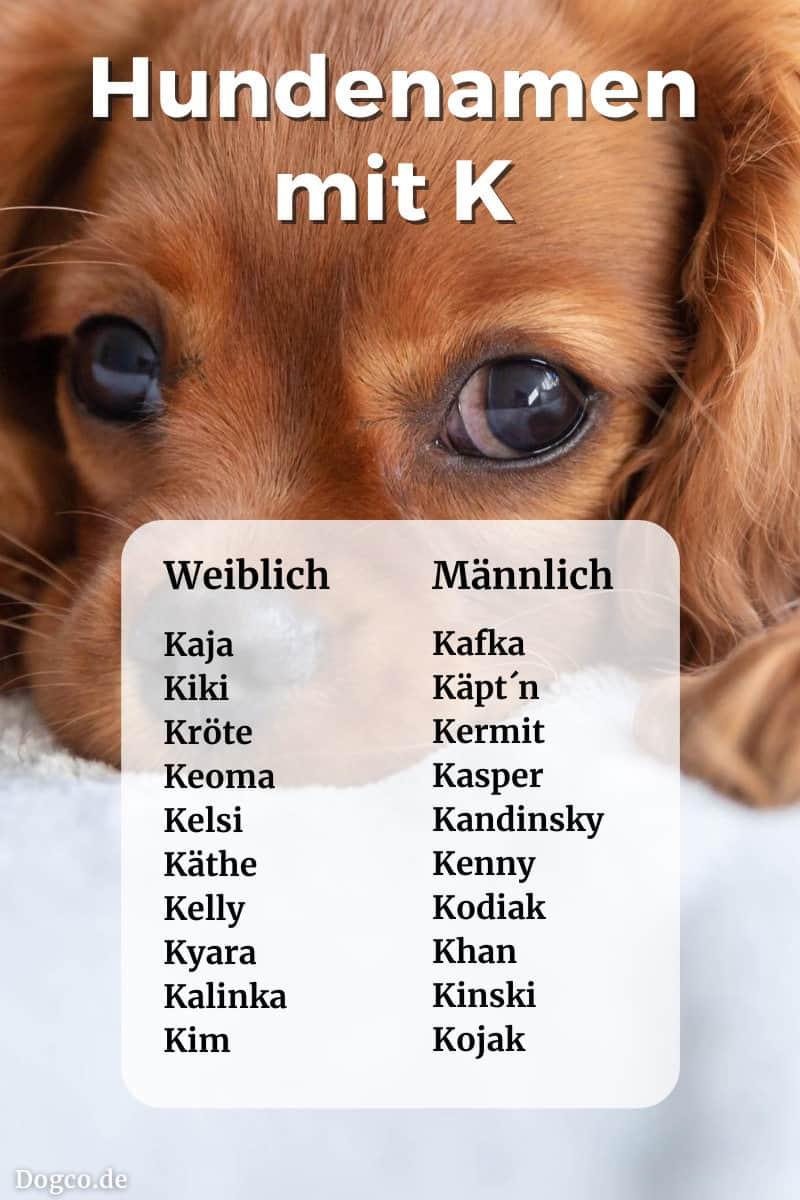 Hundenamen Und Ihre Bedeutung