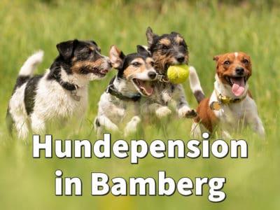Beste Hundepension in Bamberg: Top-Adressen für Ihren Hund
