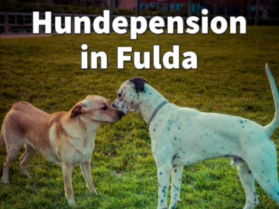Beste Hundepension in Fulda: Top-Adressen für Ihren Hund