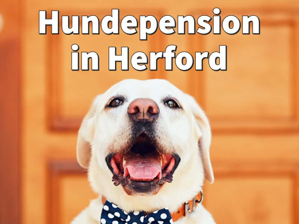 Beste Hundepension in Herford: Top-Adressen für Ihren Hund