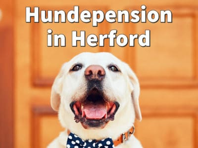 Beste Hundepension in Herford: Top-Adressen für Ihren Hund