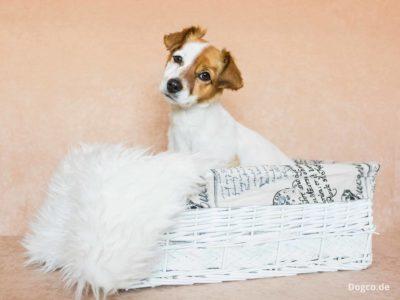 Hundepension mit Familienanschluss