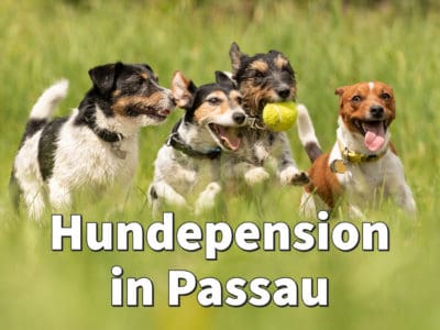 Beste Hundepension in Passau: Top-Adressen für Ihren Hund