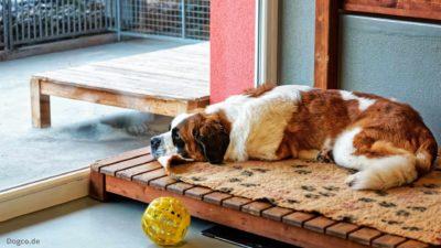 Hund döst im Zimmer der Hundepension