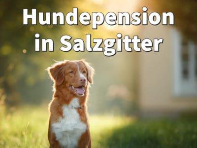 Beste Hundepension in Salzgitter: Top-Adressen für Ihren Hund