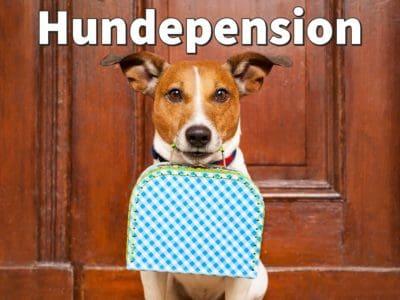 Hundepension: So finden Sie die beste Unterkunft für Ihren Hund